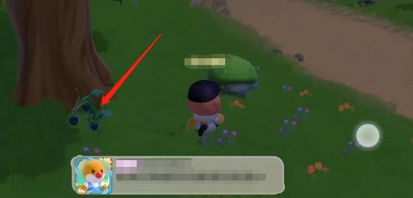 摩尔庄园手游黑色浆果位置一览