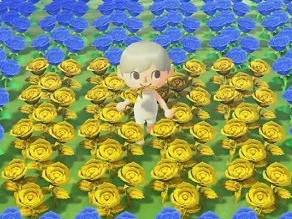 動物森友會金色玫瑰培育流程詳解