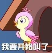 七夕布谷鸟表情包