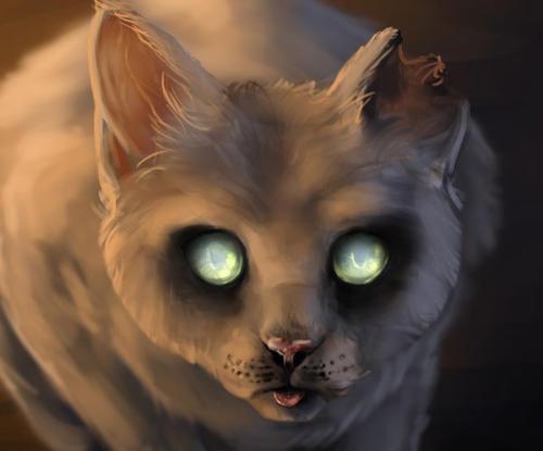 一只猫影视