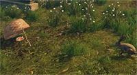 明日之后野兔出没兔子在哪里
