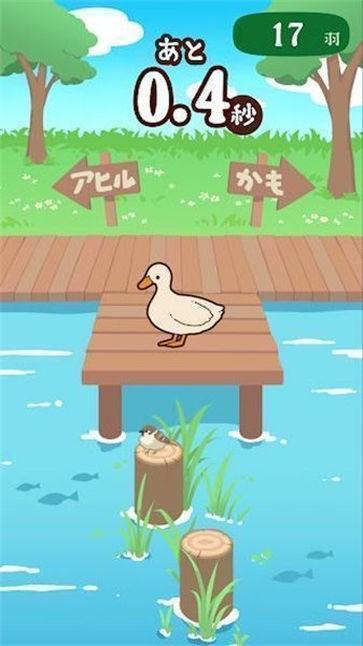 家鸭或野鸭截图1