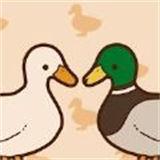 家鸭或野鸭