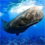 抹香鲸模拟器