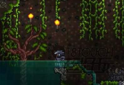 泰拉瑞亚宝石树多久成熟一次